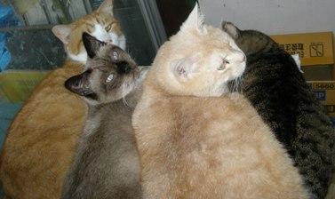 ももじろうハウスの猫