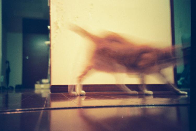 cat_017.jpg