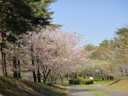 2011-04-24 12-25-09cy