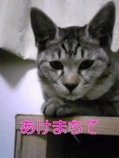 あけおめ1