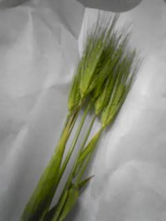 麦とララ2