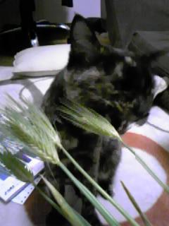 麦とララ1