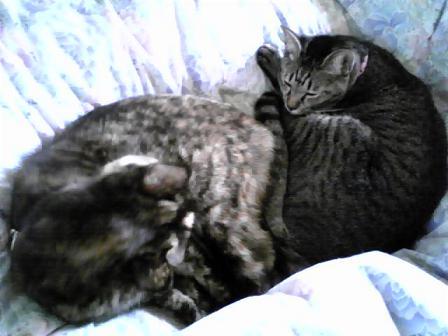 2010祝?猫団子