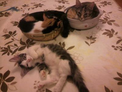 ホタルと鍋