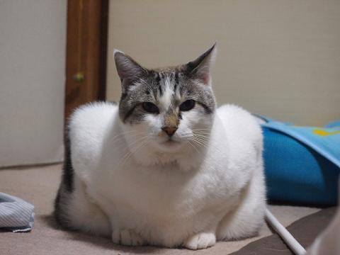 四角じゃないよ、猫ですよ