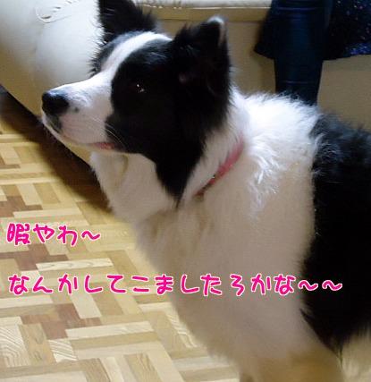 pCK_tq1A4zF8Swr.jpg