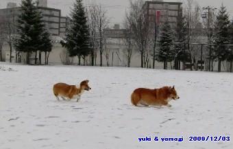 8yomo4.jpg