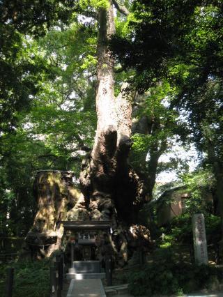 来宮神社‐1