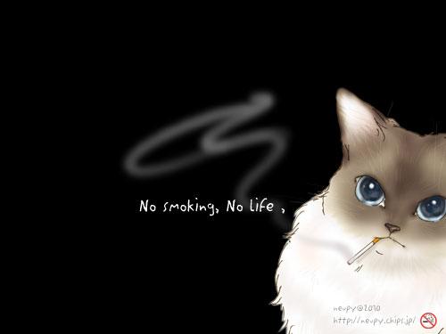 禁煙猫002