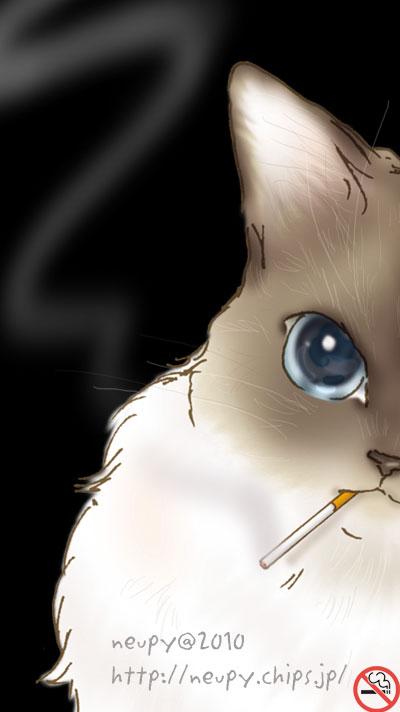 禁煙 猫001