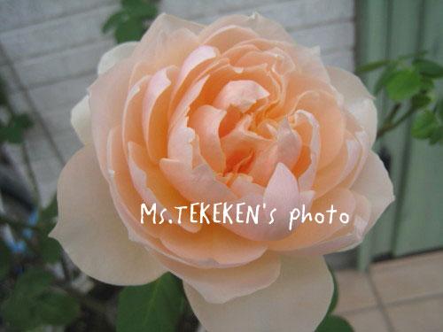 20110104_2.jpg