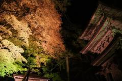 yokokura2011_06.jpg