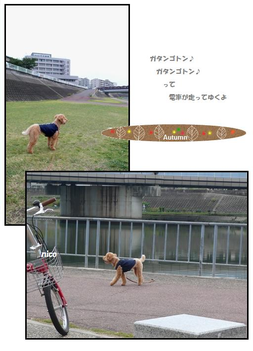 cya2_20091116010318.jpg