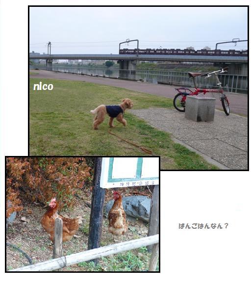 cya3_20091116010457.jpg