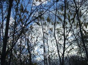 2010-11-23d.jpg