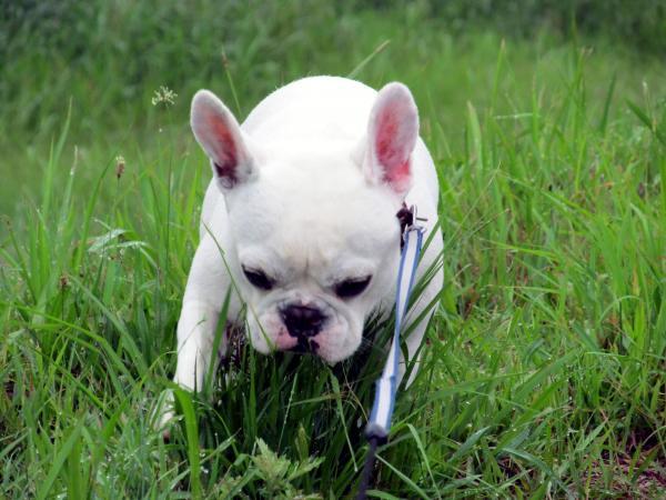 草むら探索