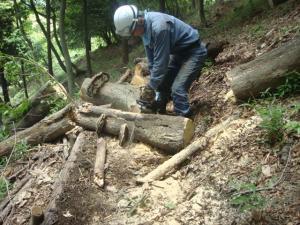 ブナの木が道を塞いでいます 4