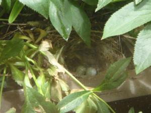 巣の中の卵