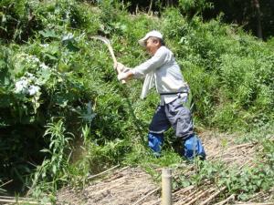 大鎌で草刈り