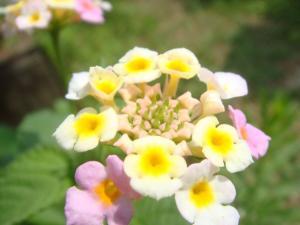 名無しの花 2