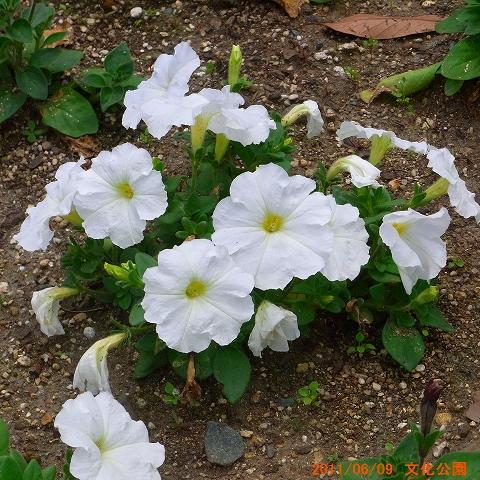 1106-flower01.jpg