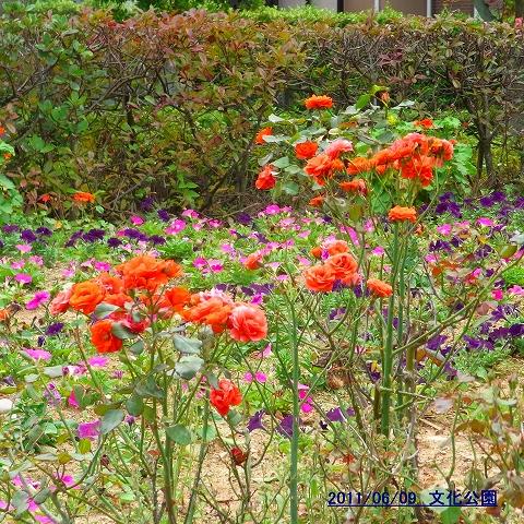 1106-flower02.jpg