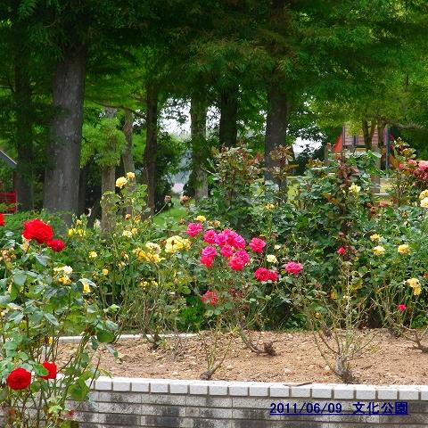 1106-flower03.jpg