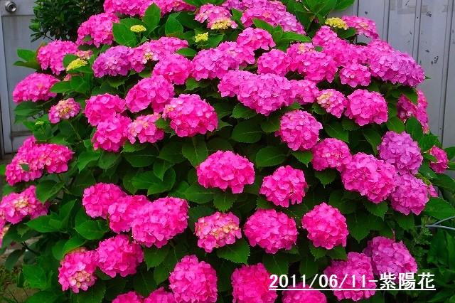 110611-flower01.jpg