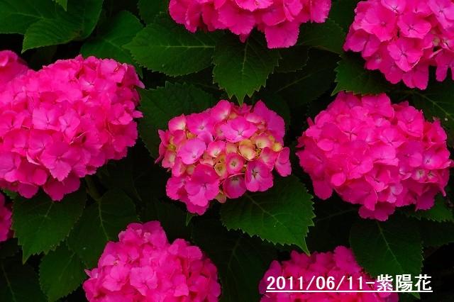 110611-flower02.jpg