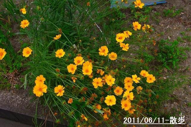 110611-flower03.jpg