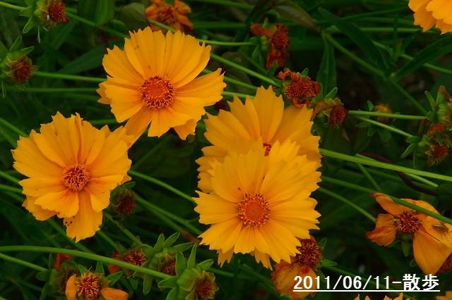 110611-flower04.jpg