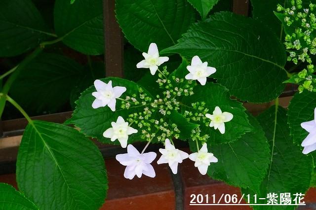 110611-flower05.jpg