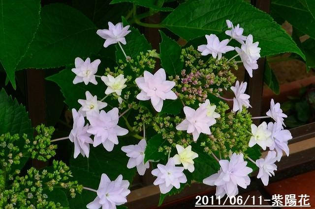110611-flower06.jpg