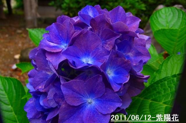 110612-flower01.jpg