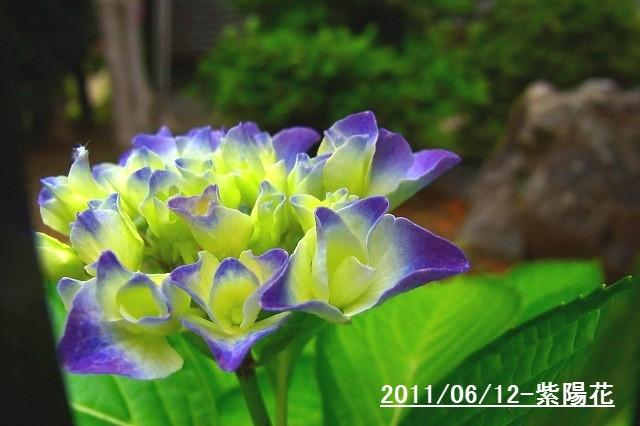 110612-flower02.jpg