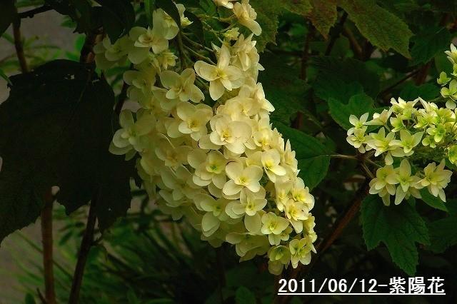 110612-flower03.jpg