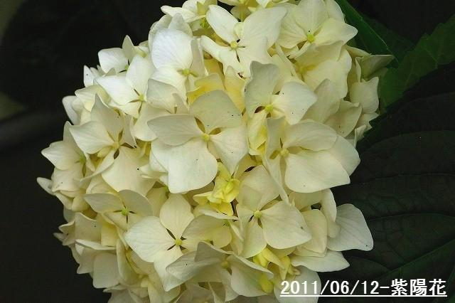 110612-flower04.jpg