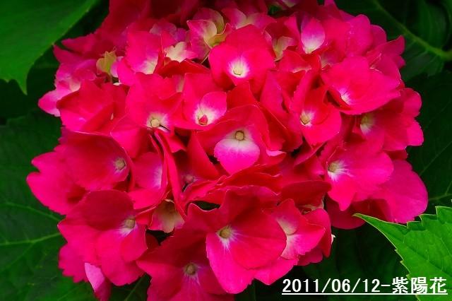 110612-flower05.jpg