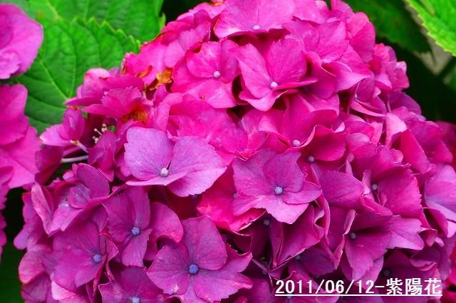 110612-flower06.jpg