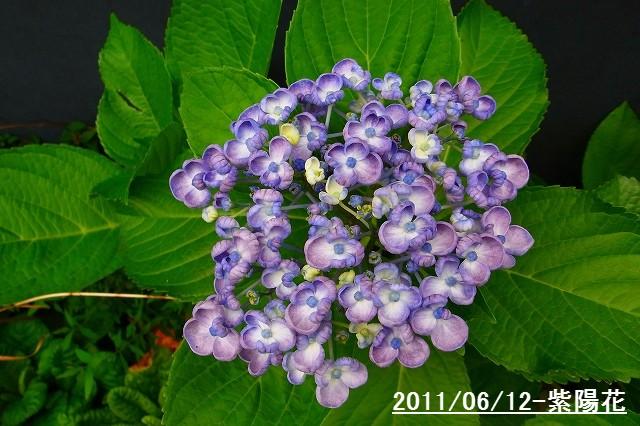 110612-flower07.jpg
