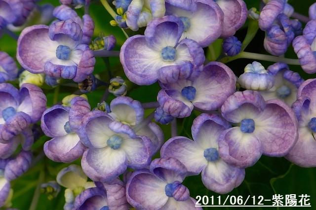 110612-flower08.jpg