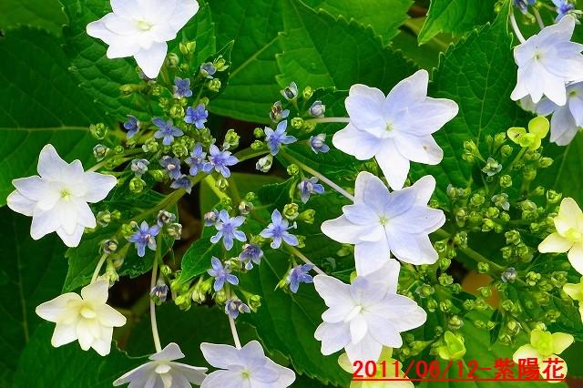 110612-flower09.jpg