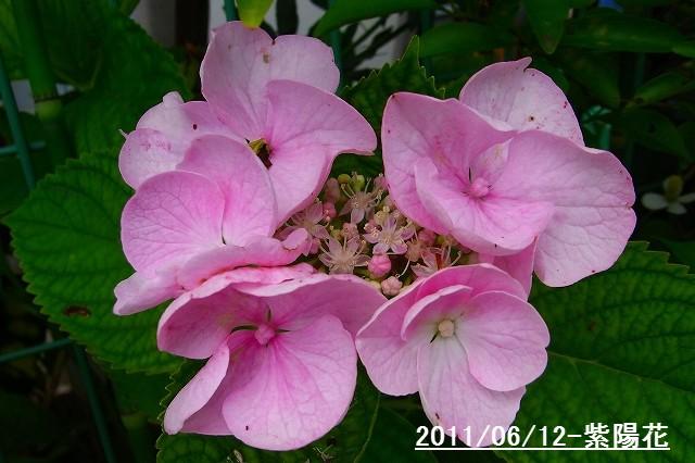 110612-flower10.jpg