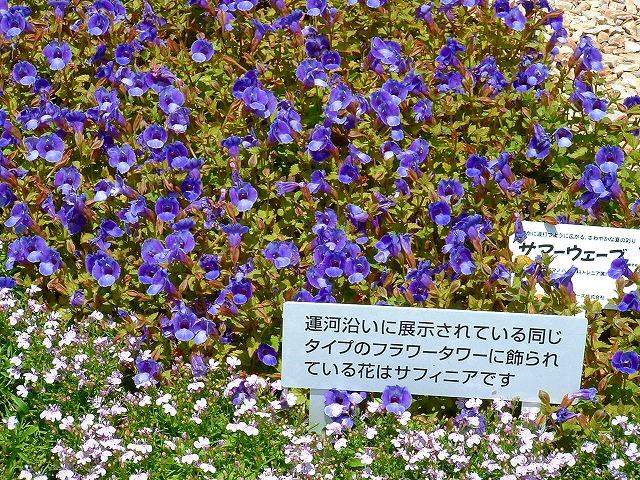 hanahaku3-22.jpg