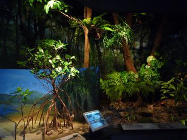 沖縄県立博物館