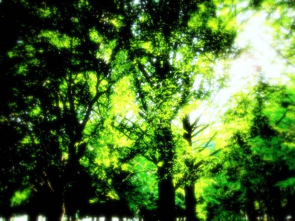 IMG_1247.jpg