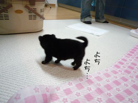 おじゃましまんにゃぁ~ ぎゃああかわいいいい!!!