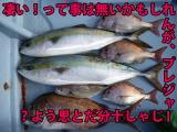 IMGP0006_20100720193625.jpg