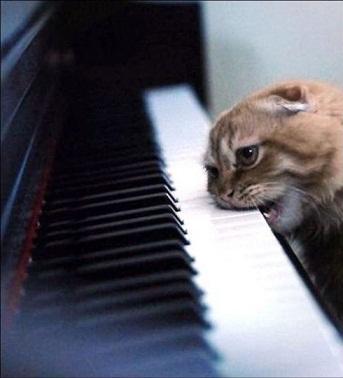 鍵盤ギザおいしす