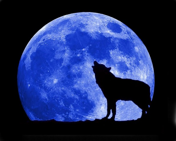 blue-moon-wolf-full[1]